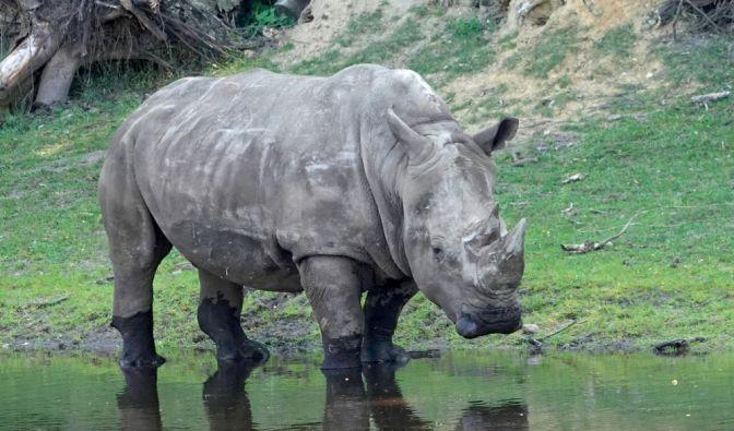 Schock-Moment im Serengeti-Park in Hodenhagen