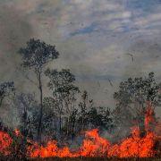 EU-Politiker fordern Handeln Brasiliens gegen Feuer in Amazonas (Foto)