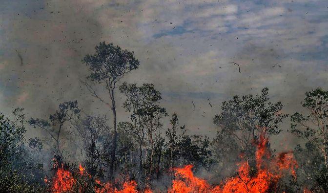 Amazonas-Waldbrand im News-Ticker aktuell