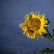 Temperatur-Sturz! Tief Egbert bringt uns den Herbst (Foto)