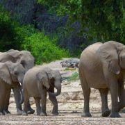"""Wiederholung von """"Tiere in der Namib-Wüste"""" online und im TV (Foto)"""