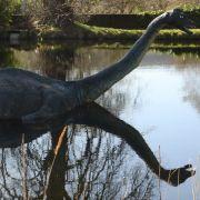 """DNA-Analyse zeigt, was """"Nessie"""" wirklich ist (Foto)"""
