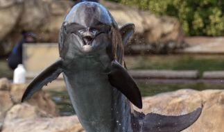 Die japanische Jagdsaison läuft - Delfin in der Dose statt Thunfisch (Foto)