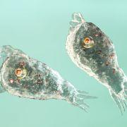 Nach Bad im Fluss! Hirnfressende Amöbe tötet Mädchen (10) (Foto)