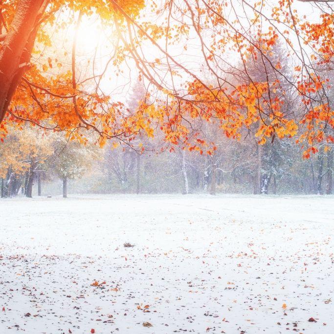 Achtung, Bodenfrost! Kalter Nordstrom lässt Deutschland bibbern (Foto)