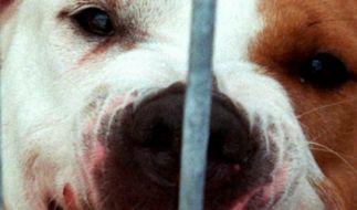 In England wurde eine Frau von ihren eigenen Hunden zu Tode gebissen. (Symbolbild) (Foto)