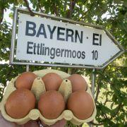 Verseuchte Eier! Rentner (94) stirbt durch Salmonellen (Foto)