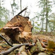 Umwelthype - Unser Wald stirbt und alle schauen zu (Foto)