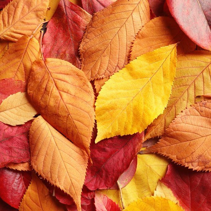 6 Gründe, warum der Herbst wirklich tödlich sein kann (Foto)