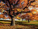 """""""Herbstwelten"""" verpasst?"""