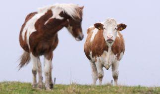 In New Jersey wollte sich ein Mann an Pferden und Kühen vergreifen. (Foto)
