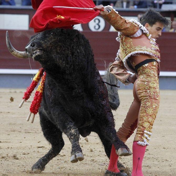 Torero versagt und wird lebensgefährlich verletzt - Not-OP! (Foto)