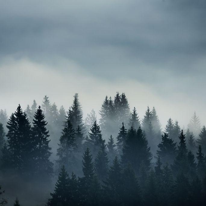 Nebel-Alarm! Graue Aussichten für Deutschland (Foto)