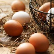 Große Gesundheitsgefahr! Diese Eier enthalten Salmonellen (Foto)