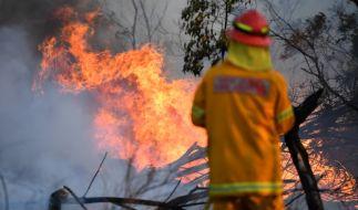 In Australien toben unzählige Buschfeuer. (Foto)