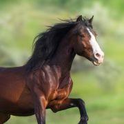 Mann vergewaltigt Pferd und bekommt DIESE Strafe (Foto)