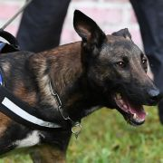 Österreichischer Hundeführer von Militärhunden zerfleischt - tot! (Foto)