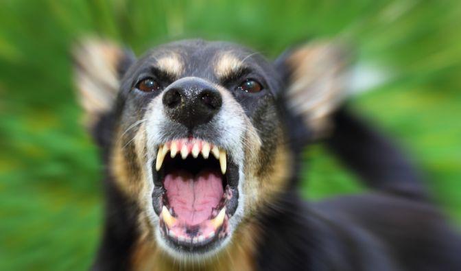 Tödliche Hunde-Attacke in Frankreich