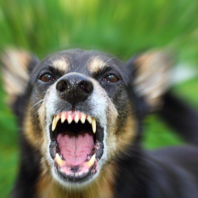Schwangere (29) von Hunden zerfleischt - tot! (Foto)