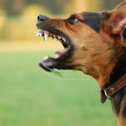 Mädchen (9) von Hunden zerfleischt - tot! (Foto)
