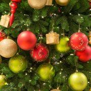Für die Umwelt! Tannenbaum einfach mieten (Foto)