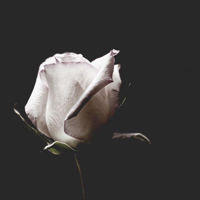 """Der Krebs war stärker! """"Downton Abbey""""-Star (74) verstorben (Foto)"""