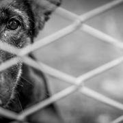 Gebrochene Rippen, ausgekugelte Hüfte! Hund Sasha brutal misshandelt (Foto)