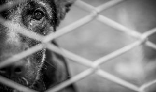 Hund Sasha wurde brutal misshandelt. (Foto)