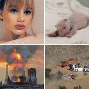 DIESE tragischen Schicksale bewegten 2019 (Foto)