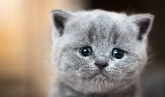 (Symbolbild): Katze in Mikrowelle gesteckt und gequält. (Foto)