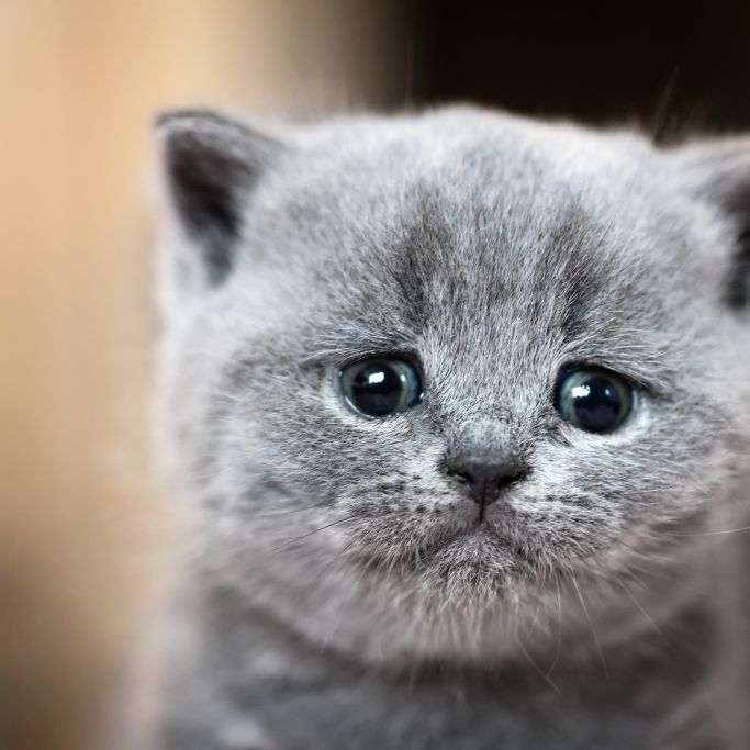 Horror-Tat! Katze in Mikrowelle gesteckt und gefilmt (Foto)