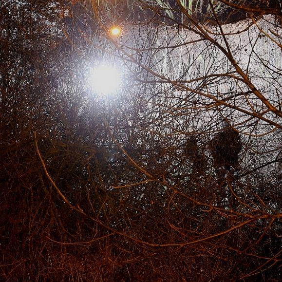 Totes Baby in Gebüsch gefunden - Mutter festgenommen! (Foto)