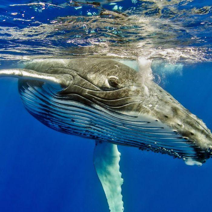 """Wiederholung von """"Meeressäuger"""" online und im TV (Foto)"""