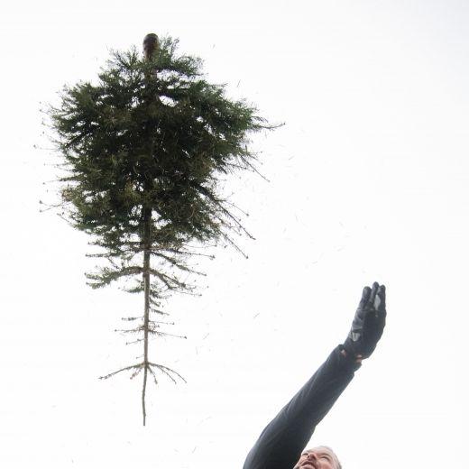 Einfach clever! So hält sich Ihr Weihnachtsbaum länger (Foto)