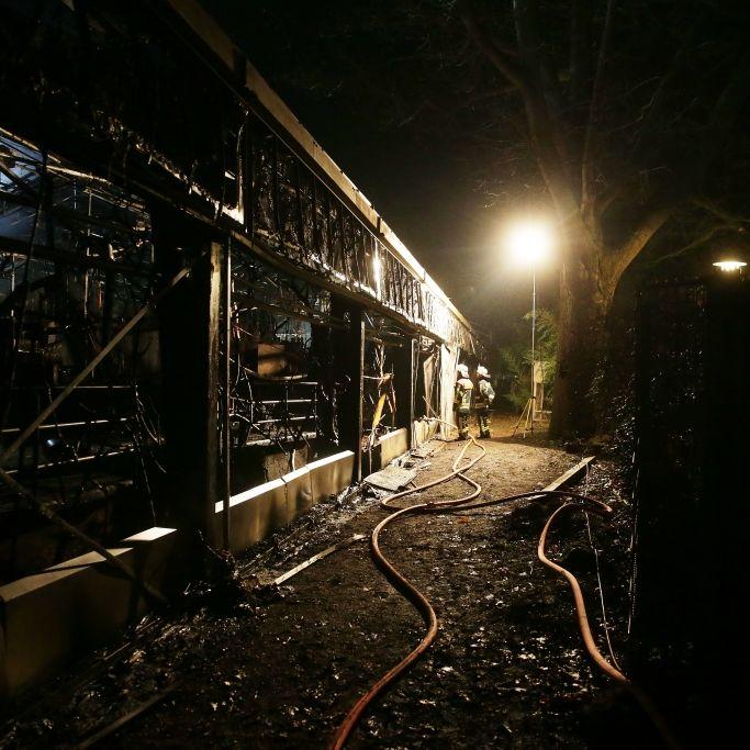Mehr als 30 Tiere tot durch Rauchgasvergiftung - 3 Krefelderinnen als Brandauslöser verdächtig (Foto)