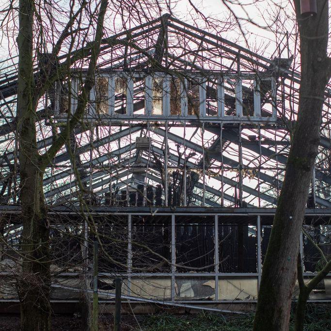 Affenhaus abgebrannt! DAS droht den Brandstiftern (Foto)