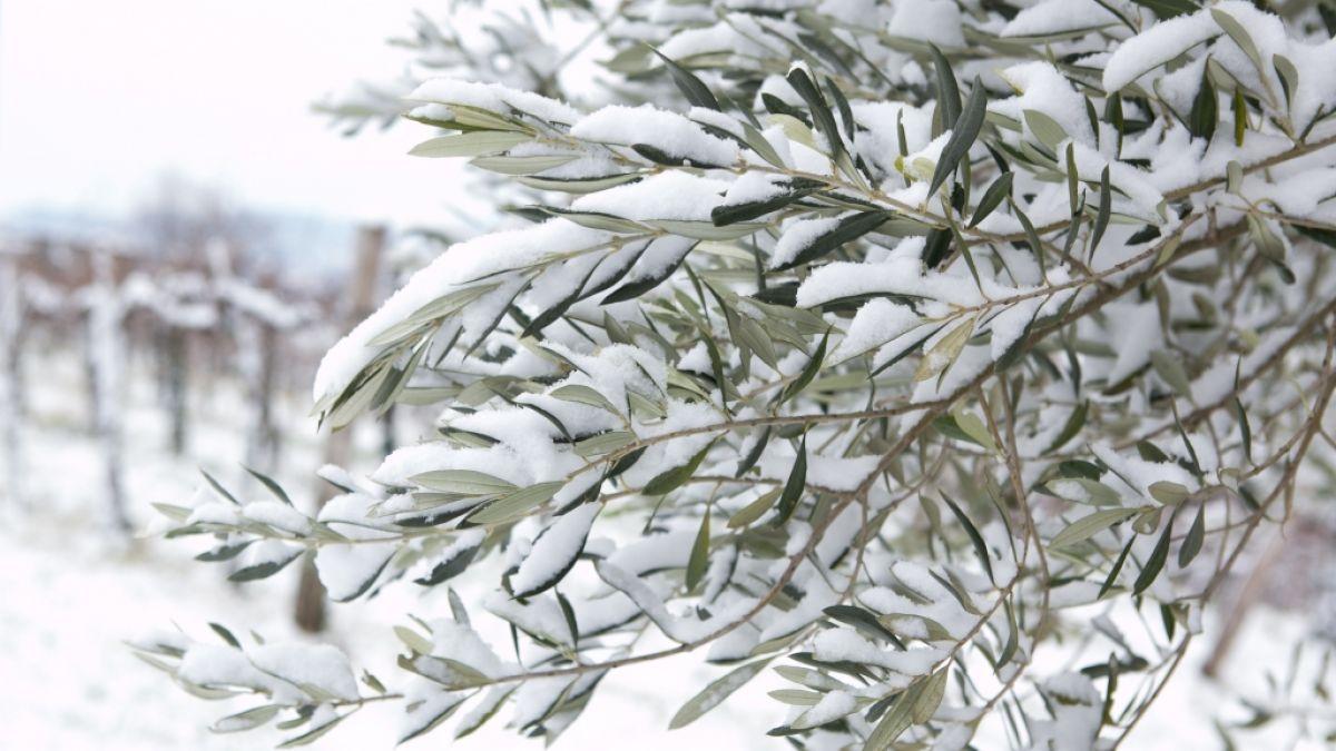 Unwetter aktuell, Januar 2020: Mittelmeer droht der Schnee-Horror! HIER herrscht Alarmstufe Orange