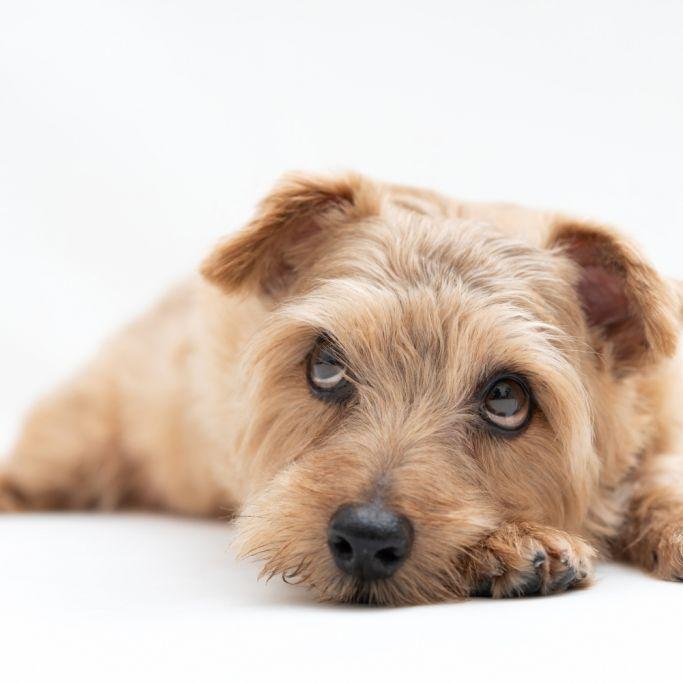 Misshandelter Hund gefesselt und zum Sterben abgelegt (Foto)