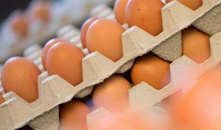Eier kosten im Discounter nun deutlich mehr. (Foto)