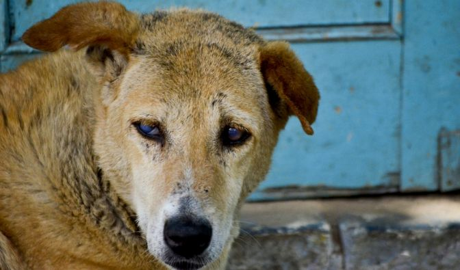 Hundeattacke in Indien