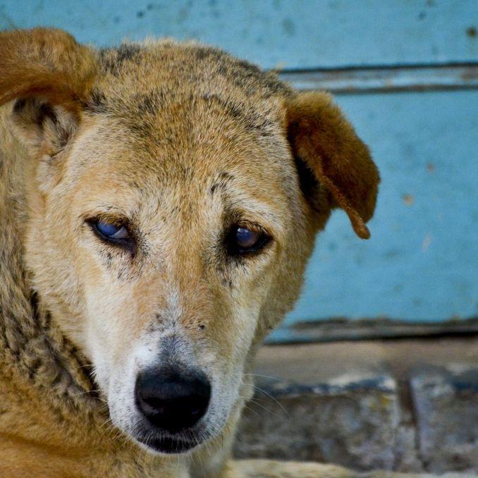 Mitten im Krankenhaus! Straßenhunde beißen Baby tot (Foto)