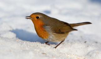 Am Wochenende dürfen sich einige Regionen in Deutschland auf winterliches Wetter freuen. (Foto)