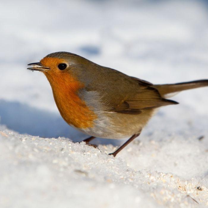 Wintermezzo! HIER gibt es am Wochenende Schnee (Foto)
