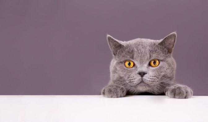 Verstümmelte Katze in Russland