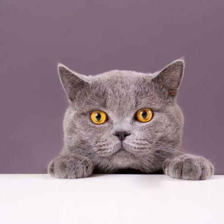 Katze ohne Tatzen, Ohren und Schwanz kann wieder laufen (Foto)