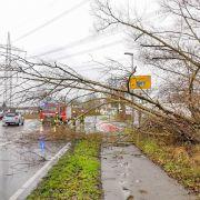Todes-Gefahr nach Sturm-Chaos! Frau (72) von Ast erschlagen (Foto)