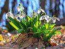 Frühlingstemperaturen mitten im Winter! (Foto)