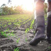 Bauernregeln sollen das Wetter vorhersagen.