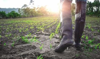 Bauernregeln sollen das Wetter vorhersagen. (Foto)