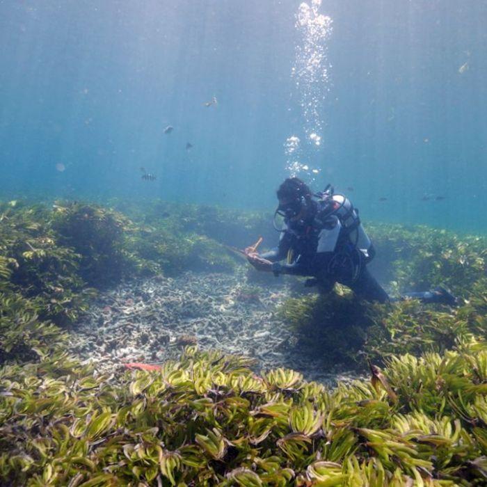 """So sehen Sie die Wiederholung von """"Seychellen"""" online und im TV (Foto)"""
